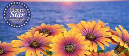 """<span class=""""field-content"""">Osteospermum Purple Sun</span>"""